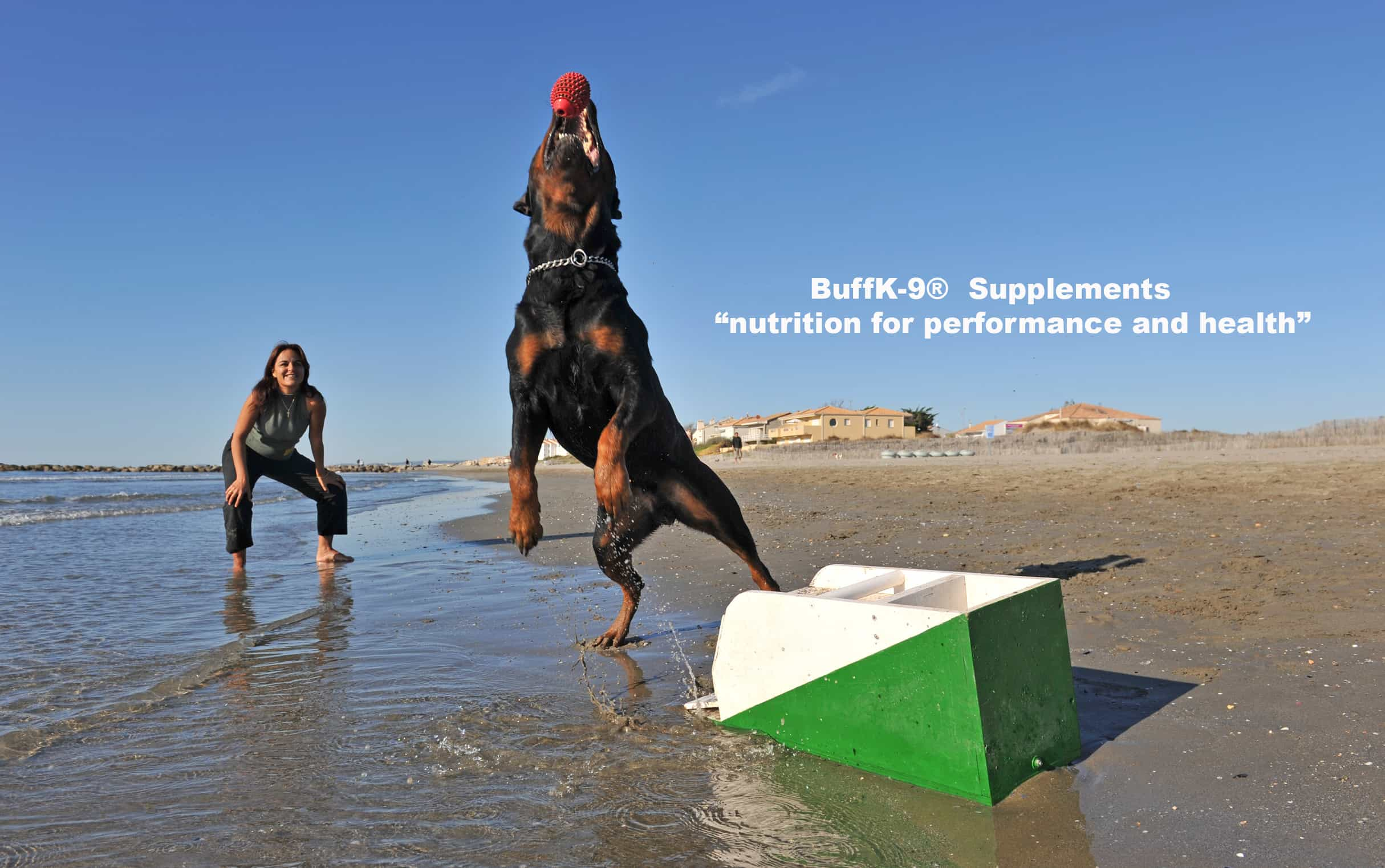 dog endurance supplement rottweiler vitamins