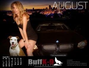 buffk9 american staffordshire terrier bmw e92