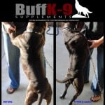 buff_k9_bully_pitbull_muscle_dog_supplement copy