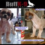 shih_tzu_health_vitamins_muscle_skin_coat_supplements_buff_k9