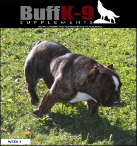 buff bulldog hybrid dog buffk 9 174 dog supplements 8839