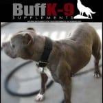 batman_buff_k9_dog_supplement_blue_pitbull_muscle