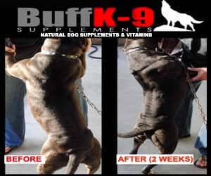 vitamins for pitbulls bullys buffk9 true champion dog