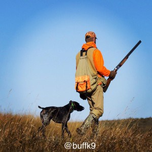 hunting dog recovery endruance buffk9