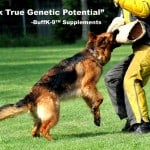 german_shepherd_schutzhund_training_buff_k9_dog_vitamins1