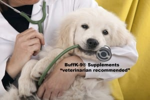 natural veterinarian secrets to pet health