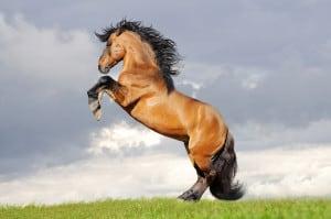 buffhorse best horse supplements
